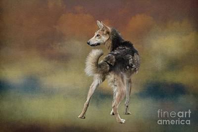 Photograph - Alaskan Husky by Eva Lechner