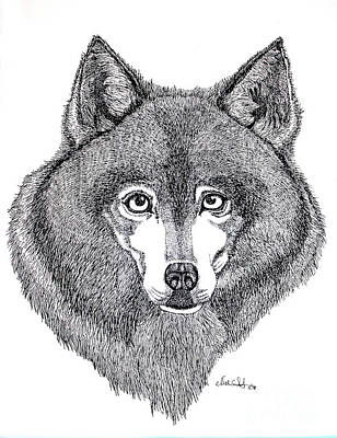 Wolf Drawing - Alaskan Husky by Nick Gustafson