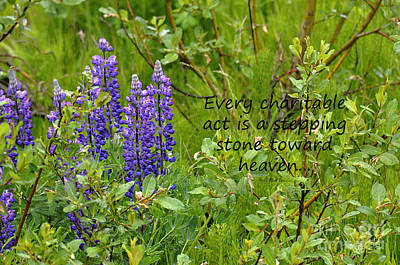Art Print featuring the photograph Alaskan Lupine Heaven by Diane E Berry