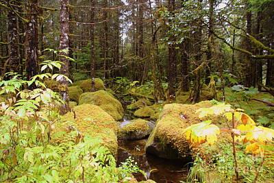 Photograph - Alaskan Rain Forest by Lennie Malvone