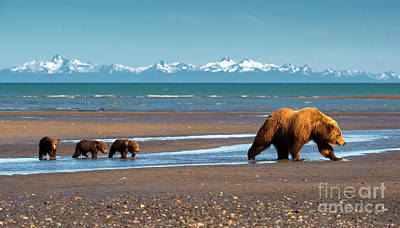 Photograph - Alaska Treasure by Aaron Whittemore