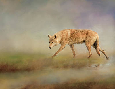 Photograph - Alaskan Wolf by Phyllis Taylor