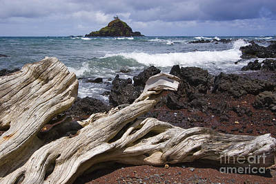 Photograph - Alau Islet, Drift Wood by Ron Dahlquist - Printscapes