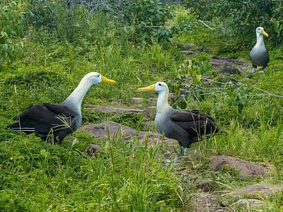Photograph - Albatross by Harry Strharsky