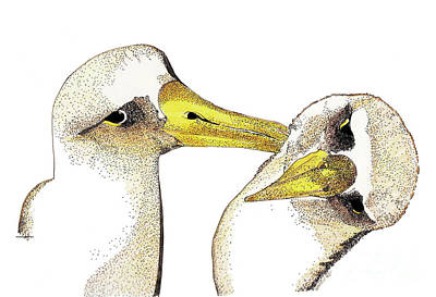 Albatross Drawing - Albatross by Nancy Mergybrower