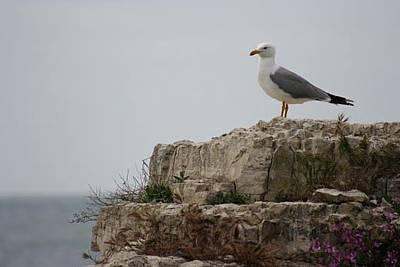 Albatross, Sile Original