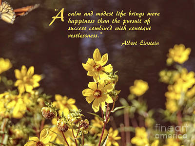 Photograph - Albert Einstein Secret To Happiness Quote by Ella Kaye Dickey