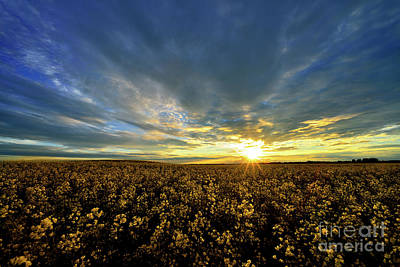Photograph - Alberta Canola Field At Sunset by Terry Elniski