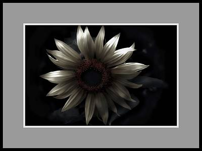 Photograph - Albino Sunflower by Sherman Perry
