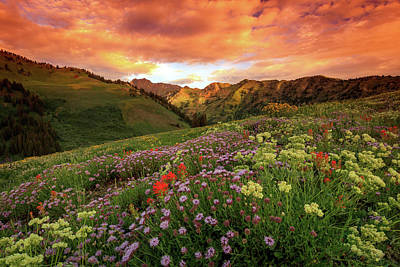Photograph - Albion Basin Golden Sunrise by Johnny Adolphson