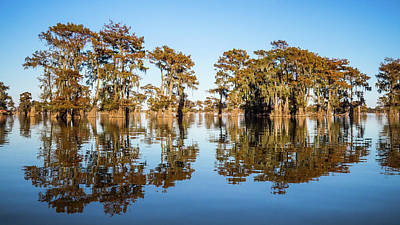 Photograph - Atchafalaya Swamp 3 Louisiana by Lawrence S Richardson Jr