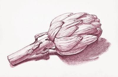 Artichoke Drawing - Alcachofra by Christina  Silva