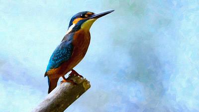 Alcedo Excotic Bird Art Print