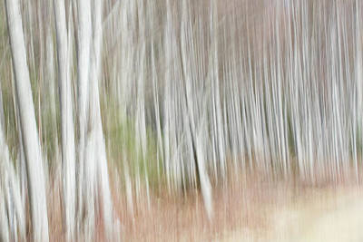 Photograph - Alder Tree Abstract by Peggy Collins