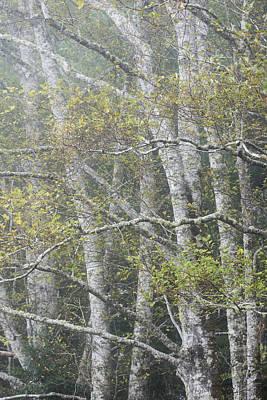 Photograph - Alder And Fog by Robert Potts