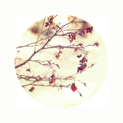 Alders Circle Art Print by Priska Wettstein