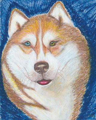 Siberian Husky Drawing - Alek The Siberian Husky by Ania M Milo