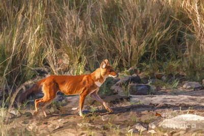 Digital Art - Alert Dhole Cuon Alpinus Kanha National Park India by Liz Leyden