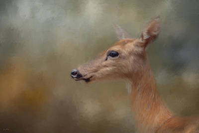 Painting - Alert Doe by Jai Johnson
