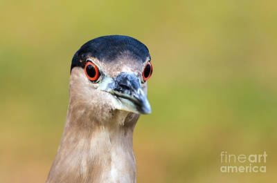 Photograph - Alert Eyes by Karin Pinkham