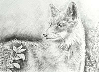 Field Lights Drawing - Alert Fox  by Elizabeth Cox