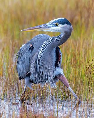 Photograph - Alert Heron by Alan Raasch