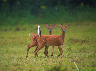 Photograph - Alert Pair by Dan Sproul