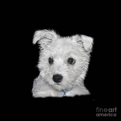 Photograph - Alert Puppy On A Transparent Background by Terri Waters