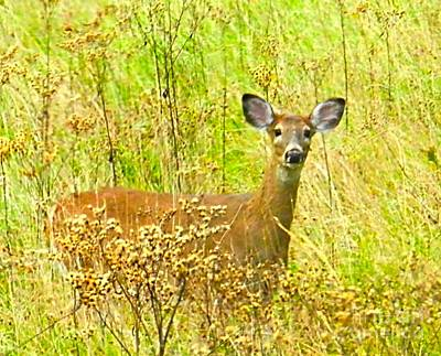 Alert White Tail Doe In Field Art Print
