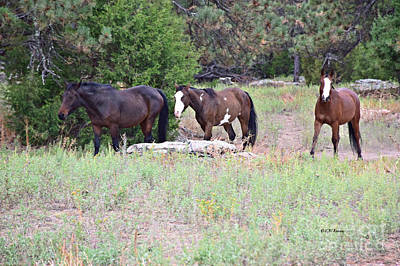 Photograph - Alerted Mustang by Kathy M Krause
