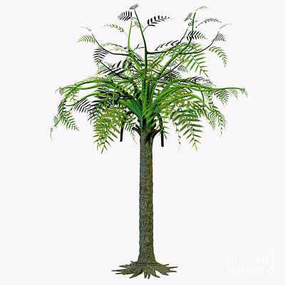 Tree Ferns Digital Art - Laurasia Alethopteris Tree by Corey Ford
