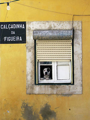 Photograph - Alfama Dog In Window - Calcadinha Da Figueira  by Menega Sabidussi