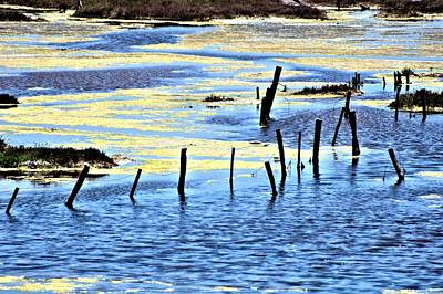 Photograph - Algae Bloom by Bob Wall