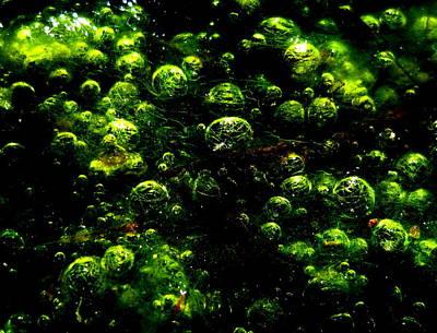 Algae Bubbles Art Print by Catherine Natalia  Roche