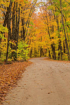 Photograph - Algonquin Autumn Road by Gary Hall