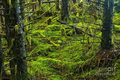 Photograph - Alice Lake Rainforest by Adam Jewell