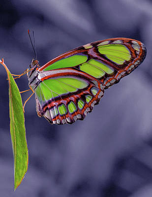 Photograph - Alien Butterfly by Jean Noren