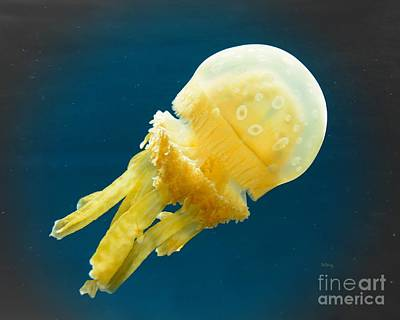 Photograph - Alien Jelly by Patrick Witz