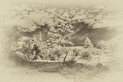 Photograph - Alien Landscape Infrared by Jim Cook