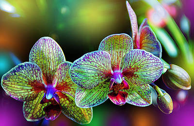 Glowing Photograph - Alien Orchids by Bill Tiepelman