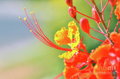 Photograph - Alien Pods And Petals by Debby Pueschel