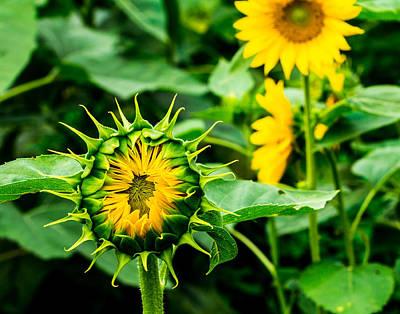 Photograph - Alien Sunflower by Leah Palmer