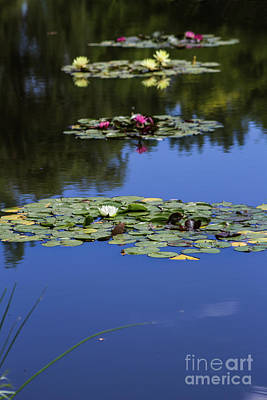Photograph - Aligned In The Pond by Steven Parker