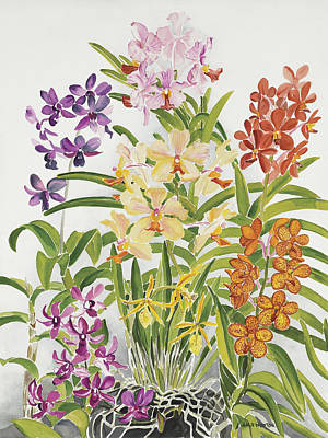 Alis Orchids Art Print by Anji Worton