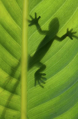 Lizards Photograph - Alive by Dan Holm