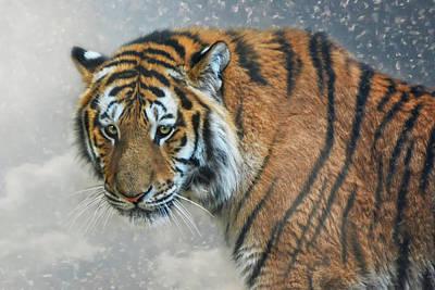 Siberian Tiger Photograph - Aljoscha by Joachim G Pinkawa