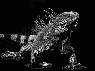 Iguana Drawing - All About Attitude by Heather Ward