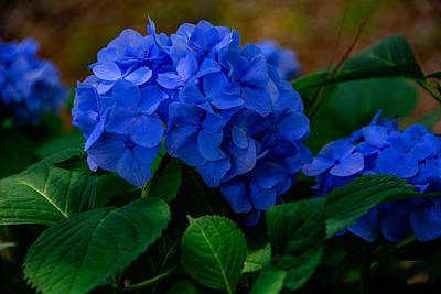 Photograph - All About Blue by John Harding