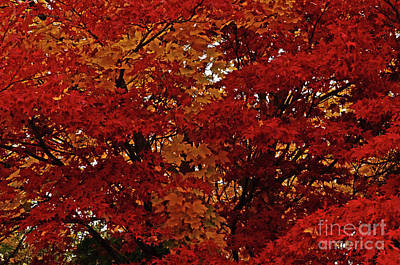 Photograph - All About Maple by Greg Patzer