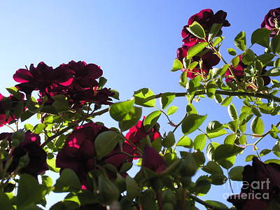 All About Roses And Blue Skies I Art Print by Daniel Henning